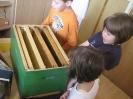 Prezentacije u dječijim vrtićima na temu Pčelica i med_22