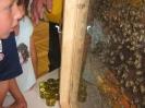 Prezentacije u dječijim vrtićima na temu Pčelica i med_38